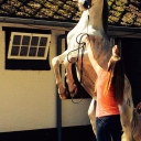 for sale! 19 years old, Stallion Andalusian highly qualified <br />Bussem,Noord-Holland